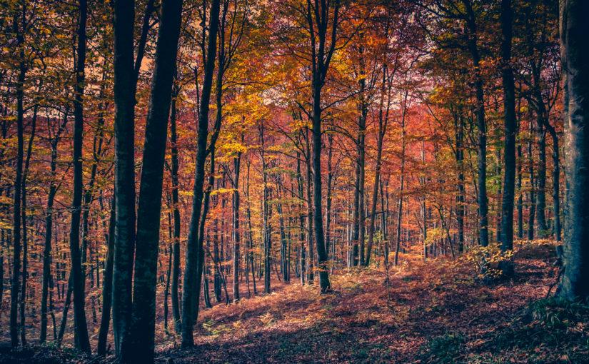Veranstaltungen Oktober Harz